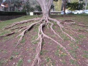 Strong roots are a strong foundation